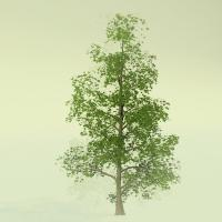 Buy cheap model tree for train layout, scale model tree,Ficus microcarpa tree, bulk,Banyan tree from wholesalers