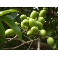 Buy cheap Water Soluble Olive Leaf Extract Oleuropein Hydroxytyrosol --Olea europea L. from wholesalers