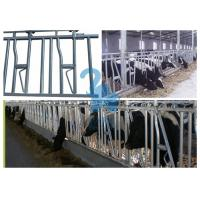 Buy cheap Metal Locking Feed Barriers Livestock Headgate / Headlocks For Beef Cattle from wholesalers