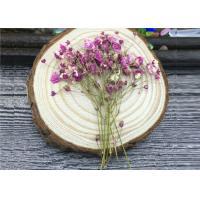 DIY Handmade Long Dried Flowers , Babys Breath Materials Real Dried Flowers