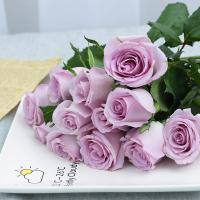 Buy cheap Fresh cut roses natural flowers wholesale prices export fresh cut blue roses ocean song PURPLE rose from wholesalers