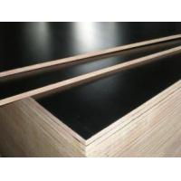 Buy cheap 18mm black browm film faced plywood / construction plywood from wholesalers