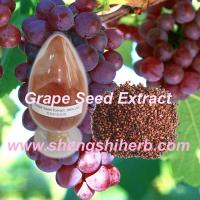Buy cheap Grape Skin Extract product