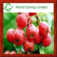 Buy cheap Herbal Extract Hawthorn Fruit Extract Flavone 5%-20% HPLC product