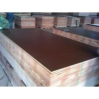 Buy cheap E2 poplar, combi Melamine coated construction formwork plywood brown film / films from wholesalers