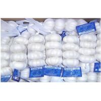Buy cheap Pure White Organic Fresh Garlic Fresh For Cooking , Medicinal 4.5cm - 6.5cm, Strong bactericidal from wholesalers