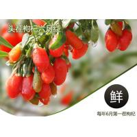 Buy cheap Weight Loss Herbal Dried Fruit Pure Goji Berry Wolfberry / Chinese Wolfberr from wholesalers