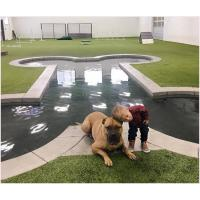 Buy cheap 20mm Non Toxic Pet Artificial Turf Green With Good Drainage For Pets And Dogs from wholesalers