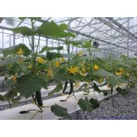Buy cheap Section 4m Commercial Hydroponic Greenhouse For Lettuce / Cucumber / Tomato from wholesalers