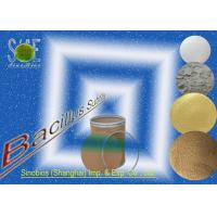 Buy cheap Nutritional Bacillus Subtilis Probiotic Feed Additives for Poultry SEM-BS200BI from Wholesalers