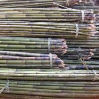 Buy cheap Bamboo Poles, Widely Used in House Decorations and Gardening from wholesalers
