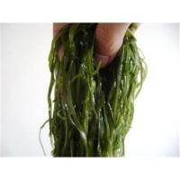 Buy cheap Wholesale laver seaweed soup from wholesalers