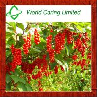 Buy cheap Schisandra chines Extract 1%-9% Schisandrin & 3% Schizandrol A for liver from wholesalers