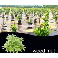 Buy cheap 1-6 Metere width black  color plastic garden ground cover supplier with best price by sincere factory/manufacturer from wholesalers