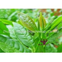 Buy cheap Anti Cancer Natural Green Tea Extract Powder Pharmaceutical Raw Materials L-Theanine Brain Use Nootropics from wholesalers