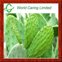 Buy cheap 100% natural High quality Cactus extract Herbal Extract for Blood Clucose Control from wholesalers