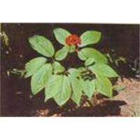 Buy cheap American Ginseng P.E. from wholesalers