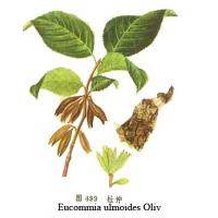 Buy cheap  Eucommia Extract  from wholesalers