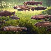 Buy cheap 3D Lenticular Picture/Image / Trout C/ 3D Lenticular Printing from wholesalers