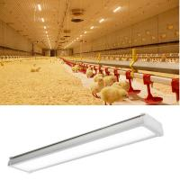 Buy cheap Anticorrosion LED Tri Proof Light Poultry Farm Lighting IP65 CE RoHs UL DLC Approval from wholesalers