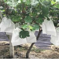 Buy cheap pp spunbond nonwoven fabric for agriculture covers&roof covers from wholesalers