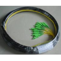 Buy cheap Waterproof 12 Core Fiber Optic Pigtail With SC APC Connector PE Jacket from wholesalers