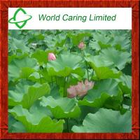 Buy cheap Herbal Extract Lotus Leaf P.E Nuciferine 1% -5% ingredient for weight loss product