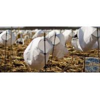 Buy cheap WHITE ROCK DECOYS BLIND DOOR DECOYS - SNOW GOOSE DECOY from wholesalers