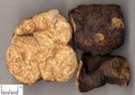 Buy cheap Polygonum Multiflorum Extract, Polygoni multiflori Radix preparata Extract, Fleeceflower Root Extract, Foti Root Extract from wholesalers