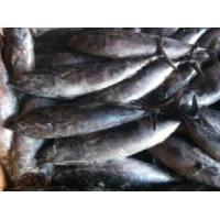 Buy cheap Frozen Whole Bonito Fish from wholesalers