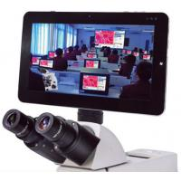 Buy cheap 5MP Microscope Pad Camera, Bundle Professional Measuring Software with Win 7(10.1 inch) from wholesalers