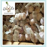 Buy cheap Normal White Garlic Fresh Garlic Purple Garlic/Red Garlic/Alho from wholesalers