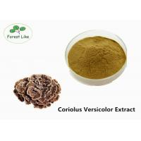 Buy cheap Food Coriolus Versicolor Extract Powder 10% Polysaccharides Boosting Immunity from wholesalers