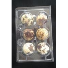 Buy cheap Disposable plastic quail egg tray 6 holes quail egg tray plastic egg tray for from wholesalers
