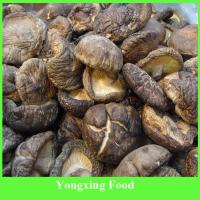 Buy cheap Mushrooms Product Type and Brown Color Dried mushroom from wholesalers
