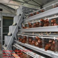 Buy cheap Chicken Use And Galvanized Steel Wire Material Automatic Chicken Layer Cage For Sale In Philippines from wholesalers