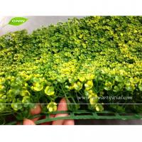 Buy cheap GNW BOX021 Outdoor Plastic Boxwood Plants Artificial Grass Mat Garden Landscaping from wholesalers