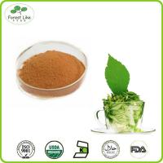 Buy cheap Organic Natural Green Tea Extract 98% Tea Polyphenol from wholesalers