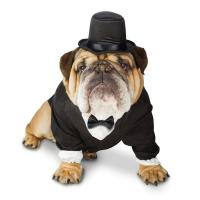Buy cheap 100% Polyester Tuxedo Halloween large Dog Formal Wear Costume for Bulldog from wholesalers