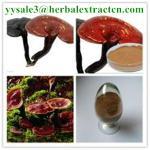 Buy cheap reishi mushroom series: Reishi slices, Reishi Mushroom Extract polysaccharide 20% triterpenoids1% , Manufacture from wholesalers