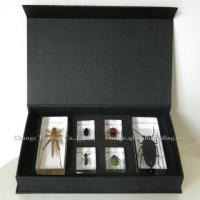 Buy cheap Hot Selling Insects Acrylic Specimens, Educational Toys product