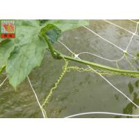 China PP Agricultural Netting For Plant Support , White Color BOP Plastic Mesh Netting on sale