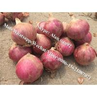 Buy cheap 5-7cm, Mesh bag Package Chinese Fresh Red Onion For All Market from wholesalers