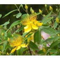 Buy cheap Best Selling St. John's Wort Extract Hypericin from wholesalers
