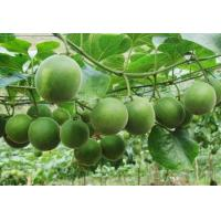 Buy cheap Mogrosides,Luo Han Guo P.E,Natural sweetener,CAS 88901-36-4, from wholesalers