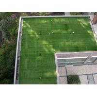 China Recycle Soft Artificial Grass For Roof Terrace PP Grid Base Fabric on sale