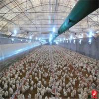 Buy cheap low cost high quality poultry house design for layers in kenya farm from wholesalers