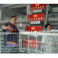 Buy cheap Huaxing Brand 120birds Chicken Layer Cages Factory Price Poultry Battery Cage For Sale Zambia Ghana Farm from wholesalers