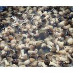 Buy cheap Straw mushroom in brine from wholesalers