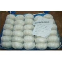 Buy cheap Natural Solo Garlic Organic Fresh Garlic White For Preventing Gangrene from wholesalers